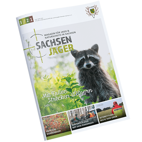 Cover Sachsenjaeger 2021-03
